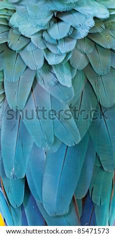 Macaw Fir - stock photo
