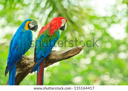 macaw parrot - stock photo