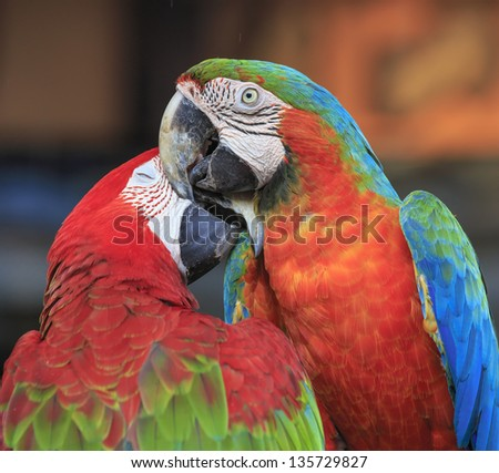 macaw parrot bird sitting on the perch - stock photo