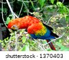 Macaw parrot in Peruvian rainforests - stock photo