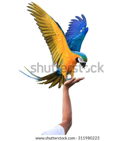 Macaw Parrot isolated on white background with clipping path - stock photo