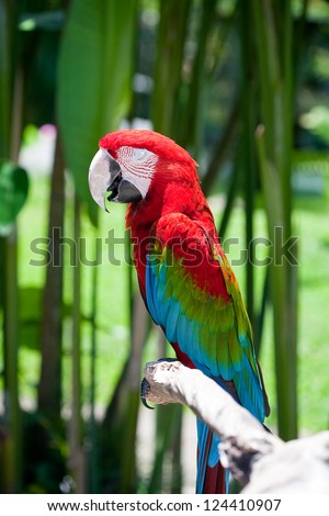 macaw  parrot sitting on branch - stock photo