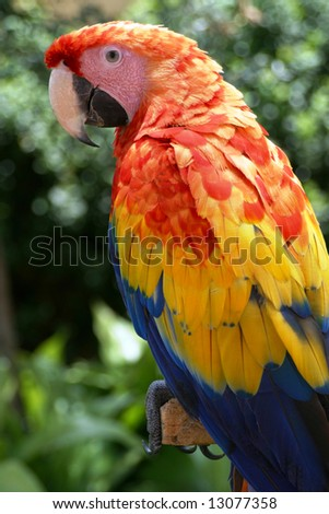 Macaw sitting on a branch - stock photo