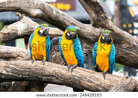 Macaw sitting on the log - stock photo