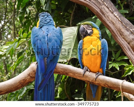 Macaws in Iguazu Falls, Brazil - stock photo