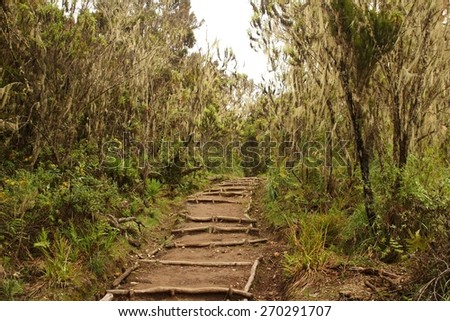 Machame route to Kilimanjaro summit. Stage 1 from Machame Gate to Machame Hut. Above jungles, about 3000 meters above sea level. - stock photo