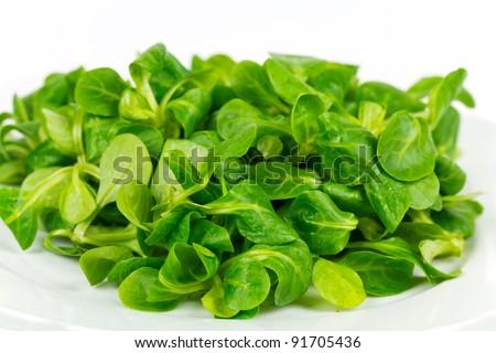 mache ,Valerianella locusta,corn salad,lamb's lettuce - stock photo