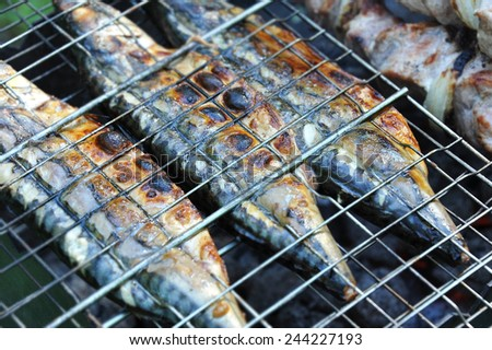 Mackerel fish on grill and hot coals, DOF - stock photo