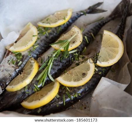 Mackerel Fish (Scomber scrombrus) - stock photo