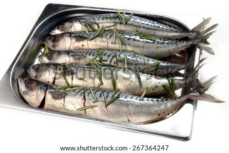 mackerel marinated in a metal bowl - stock photo