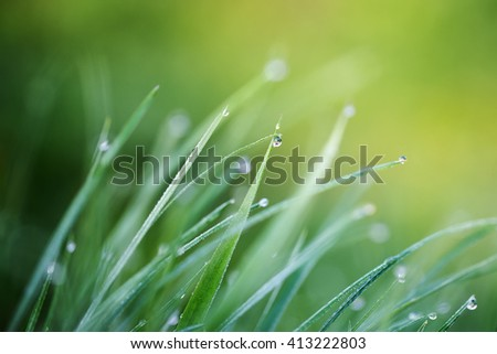 Macro. Background, water drops on the green grass. - stock photo