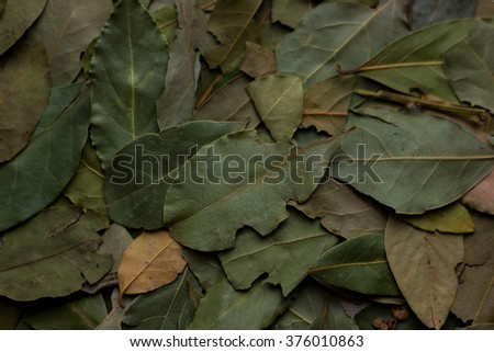 macro bay leaves for kitchen - stock photo