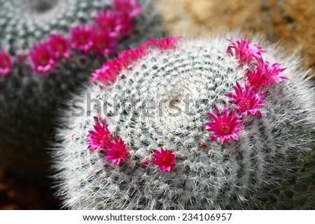 macro cactus - stock photo