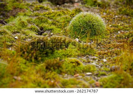 Macro close up image of tiny rocks and soil covered with real green wet humid moist authentic moss, symbolizing bonsai like preserved miniature world of evergreen natural environment - stock photo