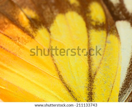 Macro close up of an colorful Butterfly Wing - stock photo