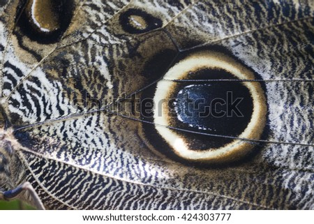 Macro close-up of butterfly wing with colorful pattern - stock photo