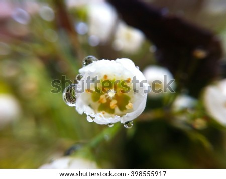 macro close up small floral blooming flower plant with droplets - stock photo
