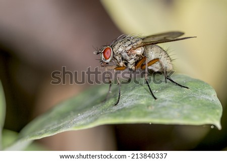 Macro closeup of a common house fly on a leaf - stock photo