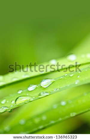 Macro closeup of water drops on grass blades with green copy space - stock photo