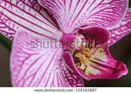 macro detail of white orchid with small depth of field  - stock photo