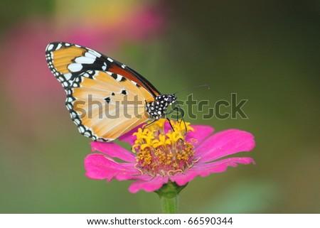 macro flower - stock photo