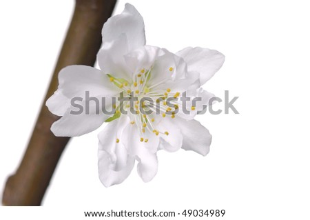 macro flowers plenty of space for text - stock photo