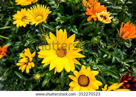 Macro flowers,Yellow flowers - stock photo