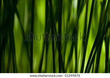 macro grass - stock photo
