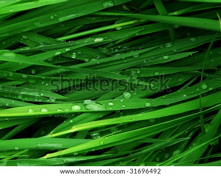 Macro green grass background with water droplets - stock photo