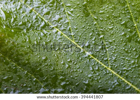 macro green leaf with water drops - stock photo