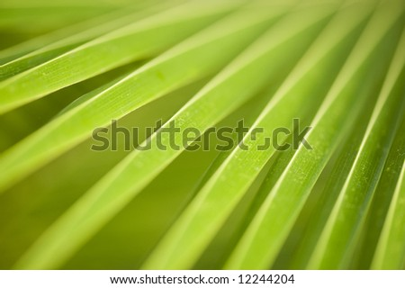 macro image of a leaf in back light. - stock photo