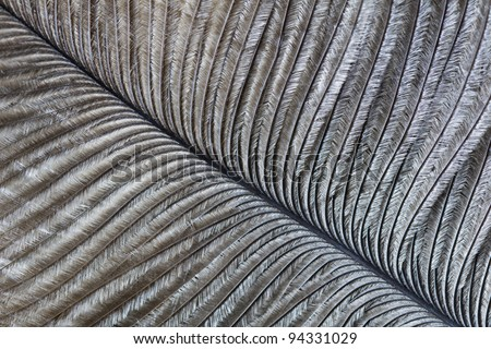 Macro image of an ostrich feather - stock photo