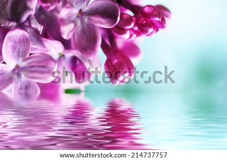 Macro image of spring lilac violet flowers with water reflection, abstract soft floral background - stock photo