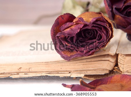 Macro image with shallow depth of field showing the texture of a dried red rose laying on the open pages of a very old book. Focus is on the pages of the book and the petals of the rose. Copy space. - stock photo