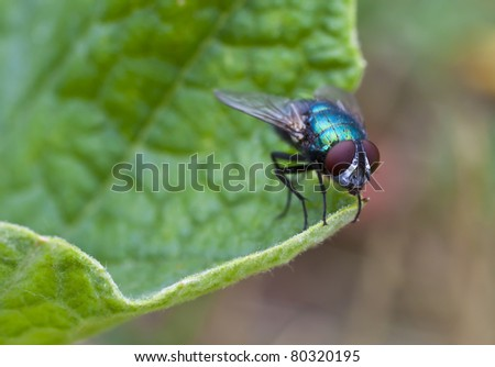 macro. insect - a fly - stock photo