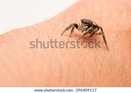 Macro jumping spider on hand - stock photo