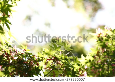 macro leaves photographed in daylight, color images - stock photo
