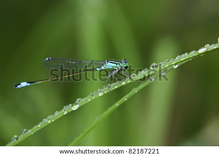 Macro of a dragonfly sitting on grass and surrounded by small water drops. Shallow depth of field. - stock photo