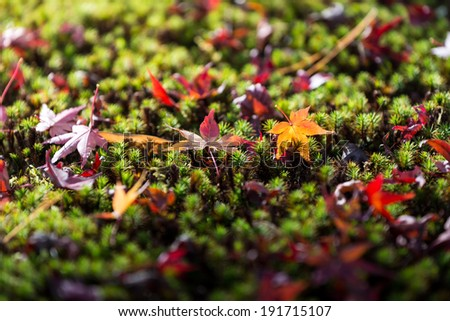 macro of a fallen leaves in autumn forest - stock photo