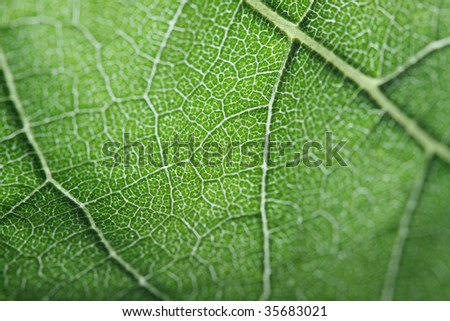 macro of a green leaf-swallow DOF - stock photo