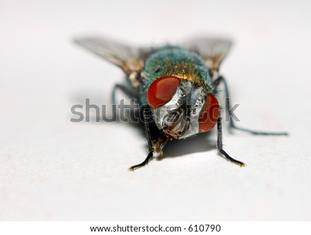 """Macro of a House Fly or """"Blowfly"""" - stock photo"""