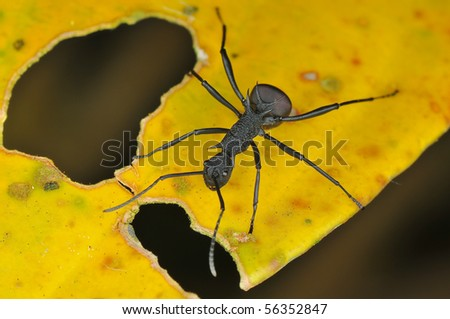 Macro of  black ant - stock photo