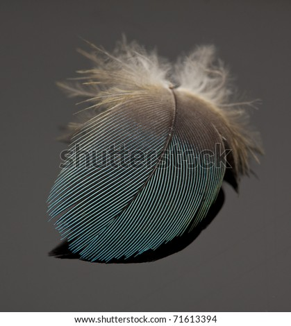 Macro of blue feather on dark background detail - stock photo