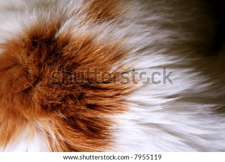 macro of cat fur - stock photo
