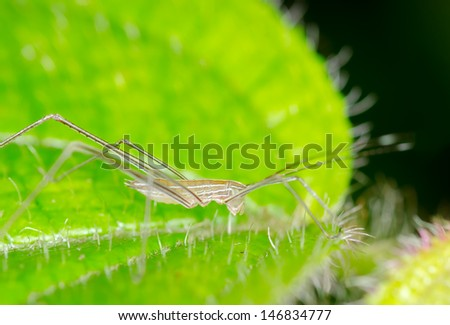 Macro of cricket - stock photo