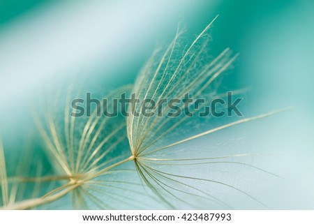 Macro of dandelion seed on abstract green background - stock photo