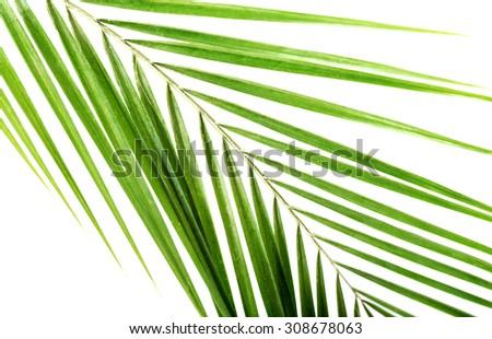 Macro of green palm leaf. - stock photo