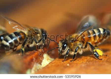 Macro of Honey Bee - stock photo
