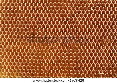 Macro of honeycell - stock photo