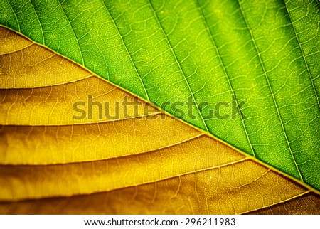 Macro of leaf. Element of design. Shallow depth-of-field. - stock photo